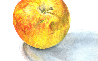 apple painting in watercolour